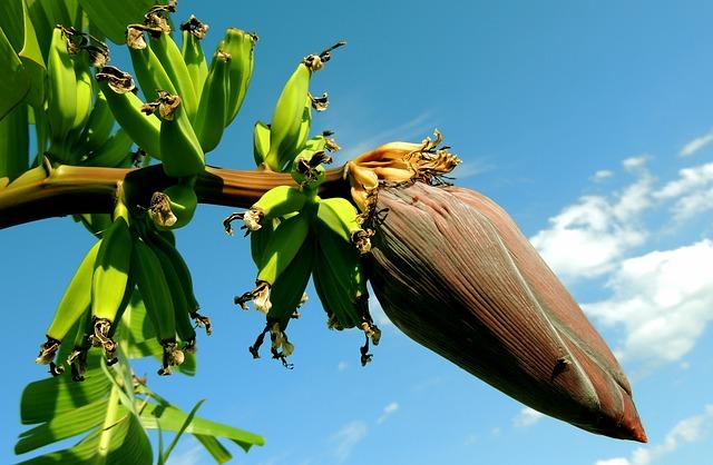 banana-256521_640